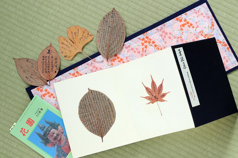 葉経集にはさまざまな種類の葉っぱが収められています。作品のきっかけになった小冊子も一緒に保管されていました